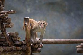picture of zoo  - monkey travel chiangmai zoo chiangmai chiangmai monkey thailand zoo animal - JPG