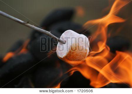 Malvavisco tostado de fuego