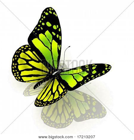 The butterfly of green color