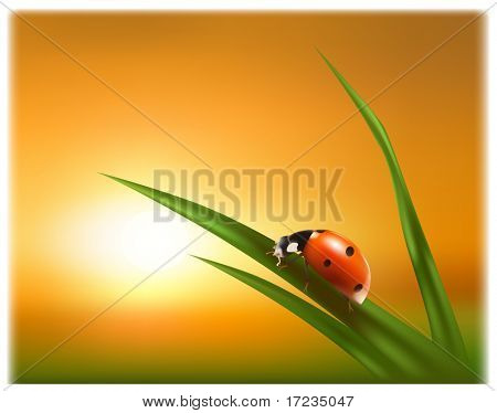 Ladybug on the green leaf against the background of the sunset picture shows a clean environment