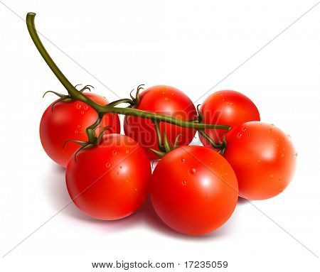 Ripe fresh tomatos with water drops