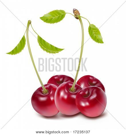 Vector. Cherries with leaves.