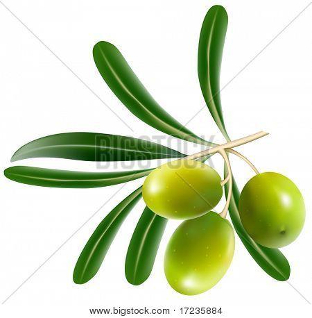 Ilustração vetorial. Azeitonas verdes com folhas.