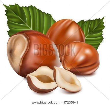 Photo-realistic vector illustration. Hazelnuts with laeves.