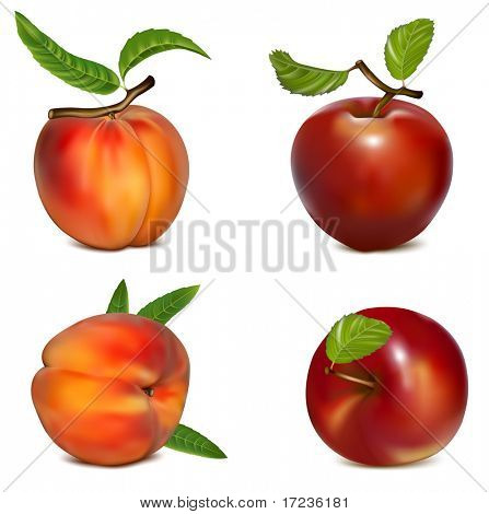 Vector set of red apples and ripe peaches.