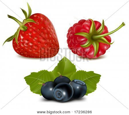Photorealistic vector illustration. Strawberry, raspberry and blueberries with leaves.