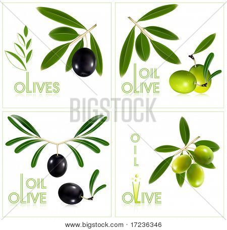 Photo-realistic vector illustration. Green olives with leaves.