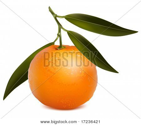 Photo-realistic vector. Mandarin with leaves.