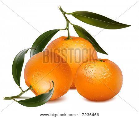 Vector fotorrealistas. Frutas de mandarinas con hojas verdes.