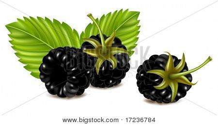 Vector illustration of ripe blackberries (dewberry) with green leaves.