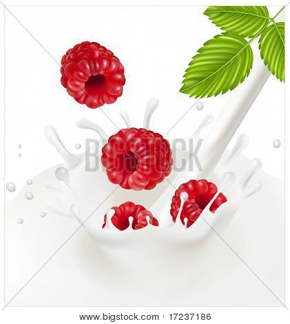 Vector illustration. Ripe red raspberries falling into the milky splash.