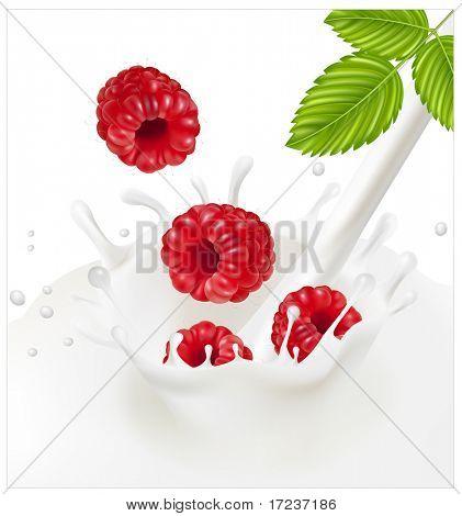 Vector illustration. Ripe red raspberries falling into the milky splash.