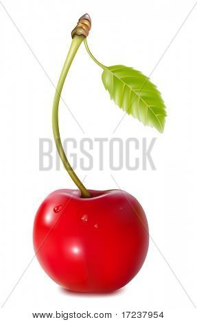 Vector. Cherry with water drops.