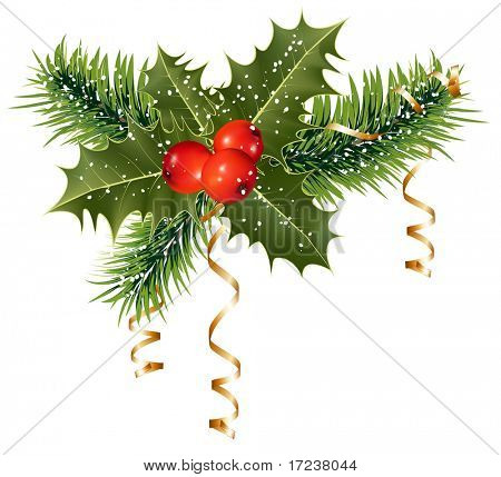 Vector. Christmas decoration: holly with berries.