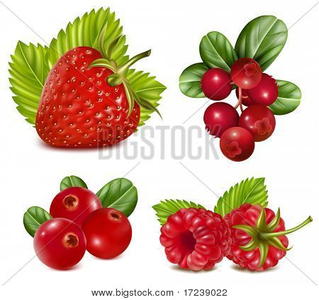 Photo-realistic vector illustration. Set of red berries with leaves.
