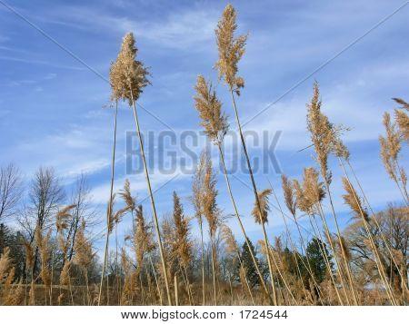 High Grass  60698