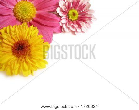 Flower Corner - 1