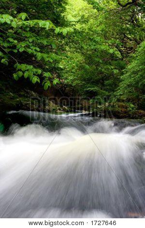 Schnell fließenden Fluss unter grünen Blätterdach der Bäume