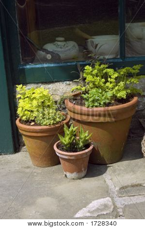 .Three Planters