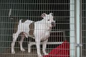 dog in jail. a sad dog in an animal pound. animal control.  poster