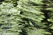 Bundles of fresh green beans . Green beans, Hanging haricot bean, Phaseolus vulgaris pods alone. Clu poster