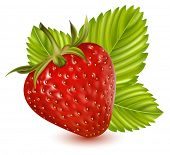 Photorealistic vector illustration. Strawberry with leaves.