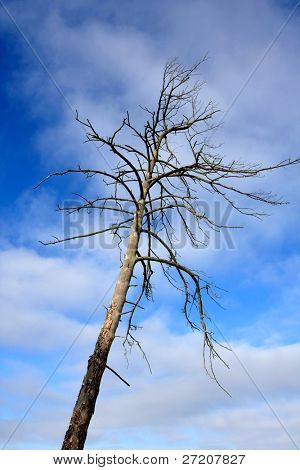 Old dead tree on blue sky and clouds background