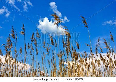 Cane on blue sky background