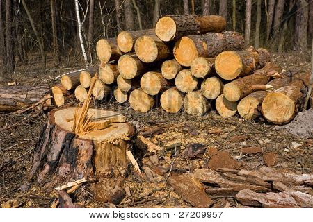 firewood store in forest