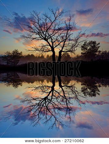 árvore sem folhas no fundo por do sol com reflexo de água