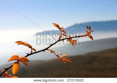 autumn branch on mountains background