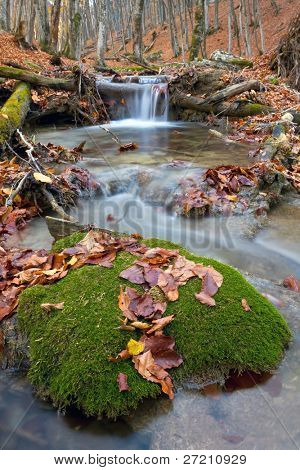 Autumn landscape with brook in forest