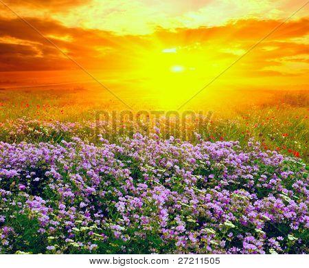 Paisaje de verano con la puesta de sol en estepa