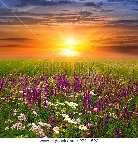 Sommerlandschaft mit Sonnenuntergang in der steppe