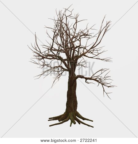 Isolated Bare Tree