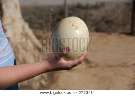 Strauß-Ei