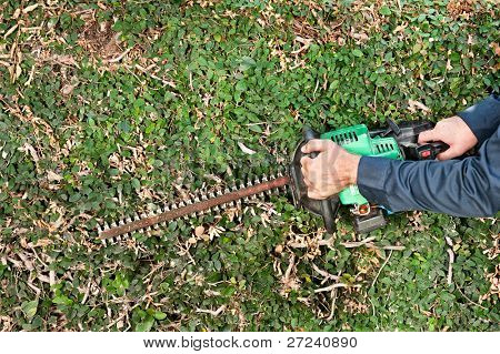 A man uses a gas powered hedge trimmer to trim vines