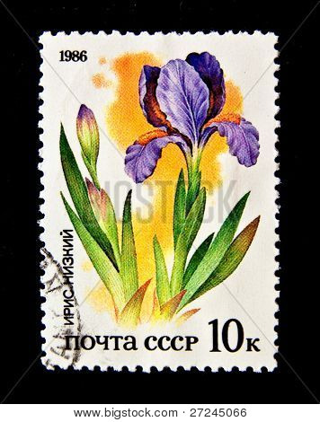 "USSR - CIRCA 1986: A stamp printed in the USSR shows flower Iris Low, circa 1986. ""Flora of Russia"": a series of 5 stamps"