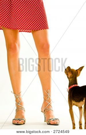 Doggy And Its Owner