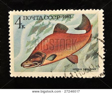 USSR - CIRCA 1983: A Stamp printed in the USSR shows sockeye red, circa 1983.