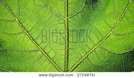 Green leaf texture. Series