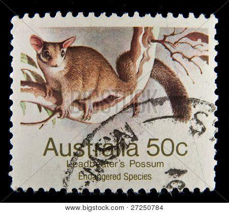 AUSTRALIA - 1992: A stamp printed in Australia shows image of a possum, series, 1992