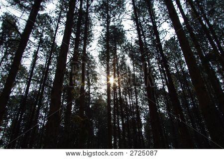 Graskop Woods