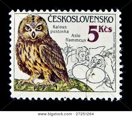 CZECHOSLOVAKIA - CIRCA 1986: A stamp printed in Czechoslovakia showing Owl, circa 1986