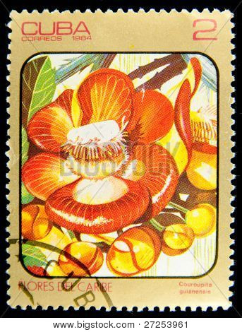 CUBA - CIRCA 1984: A stamp printed in Cuba shows Couroupita guianensis, series Caribean flowers, circa 1984