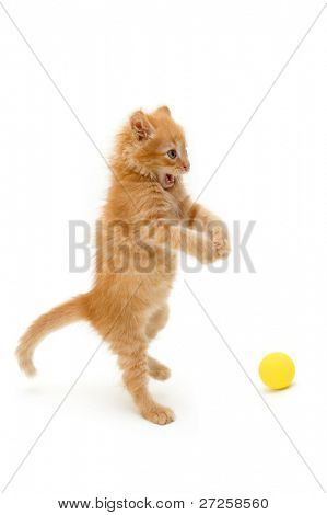 kitten funny red catch ball isolated on white background