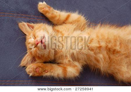 kitten sleeps on the back like a log