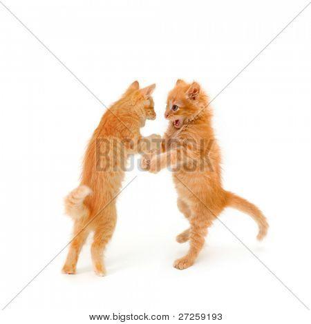 zwei Freunde Kätzchen, das Tanzen und sprechen auf weißem hintergrund isoliert