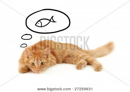 kitten dreaming of fish isolated on white background