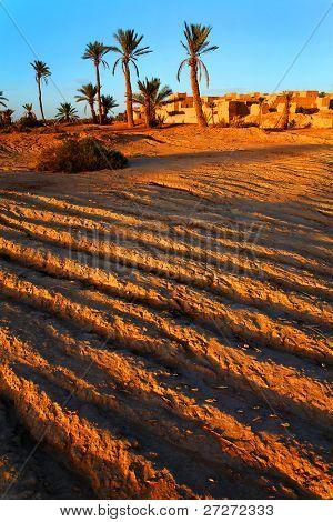 Oasis in Sahara Desert, Africa